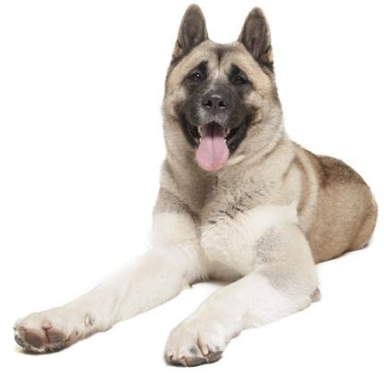 Pantenex Dog Enzymes